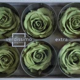 Rosa stabilizzata verde