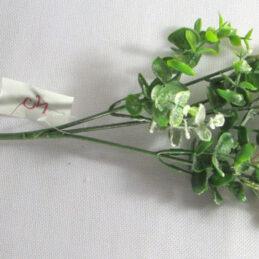 Ramo di eucalipto, con foglie e bacche bianche floccate